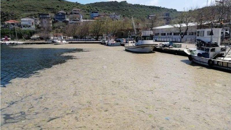 Bilim insanları, müsilaj sorunu için Marmara'ya açıldı