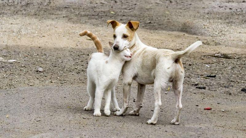 Hayvanları Koruma Kanunu geliyor! Taslakta hangi maddeler yer alıyor?