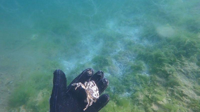 Çürüyen deniz salyası dehşete düşürdü: Altında kalan canlıları da boğmuş