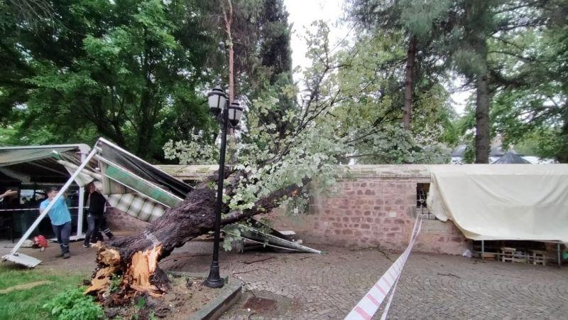 Şiddetli rüzgara dayanamayan ağaç devrildi