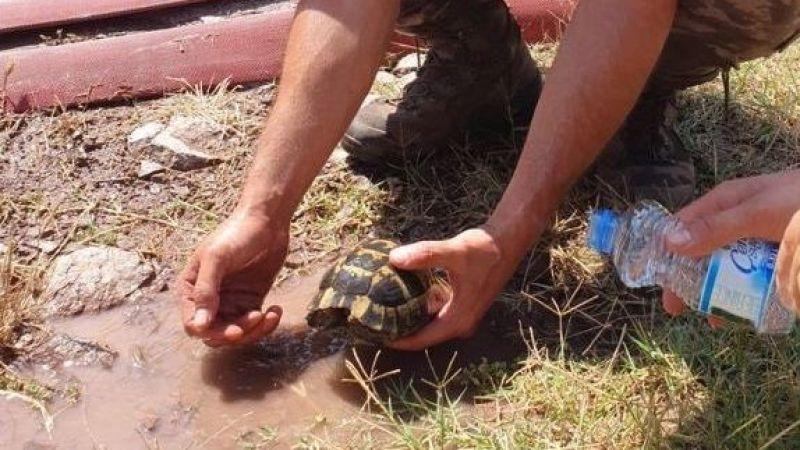 Yangından kurtardıkları kaplumbağaya elleriyle su içirdiler