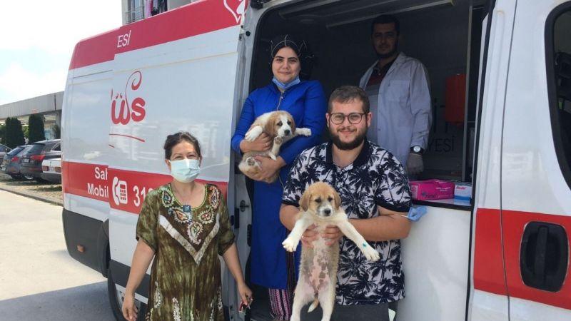 İzmit'te sokak hayvanlarının bakımları yapılıyor