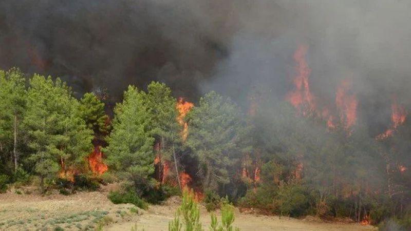 """Yangınlar bitince ne yapılmalı? """"Gelişigüzel ağaç dikilemez"""""""