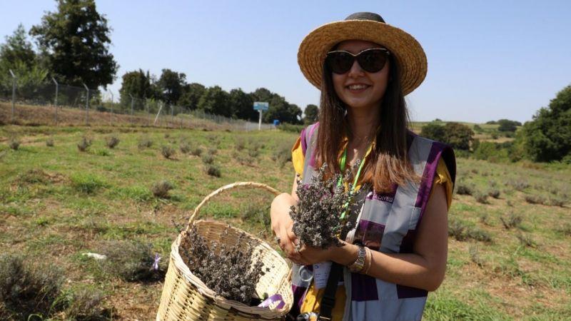 İzmit'te lavanta bahçesinde hasat başladı