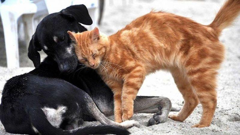 Sokak hayvanları için önemli karar