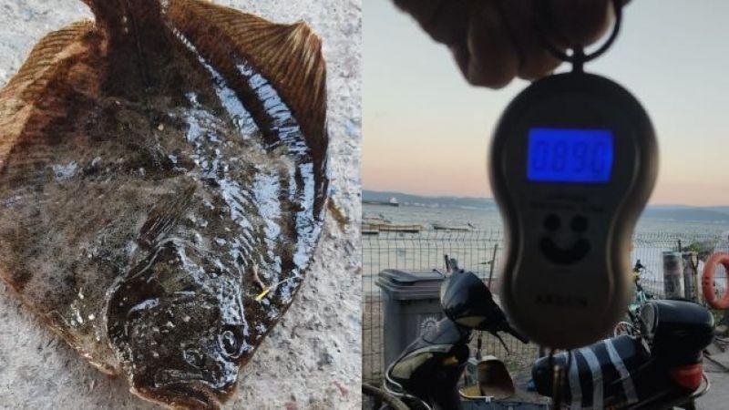 Marmara Denizi'nden güzel haber! 10 ayda 740 gram