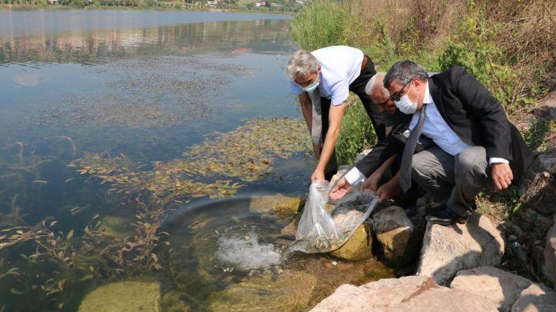 Kocaeli'deki göletlere 171 bin adet yavru sazan bırakıldı