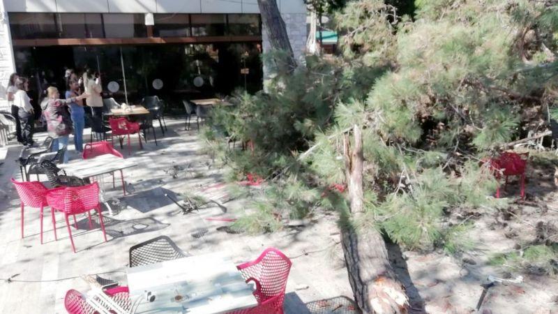 Masada oturanlar son anda kaçtı! Çürüyen çam ağacı çay bahçesine devrildi
