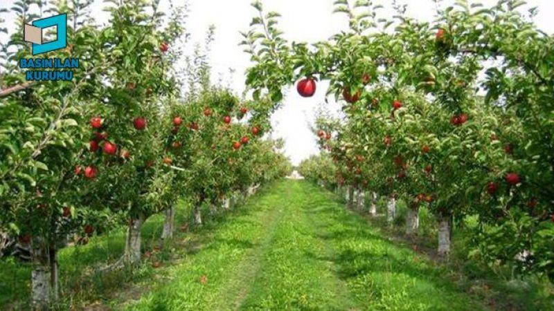 Başiskele'de icradan satılık meyve bahçesi