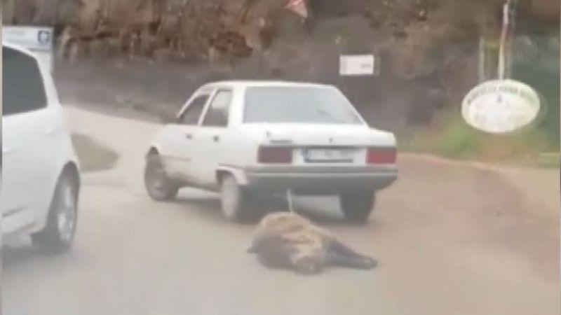 Vurduğu domuzu otomobilinin arkasına bağlayıp sürükledi
