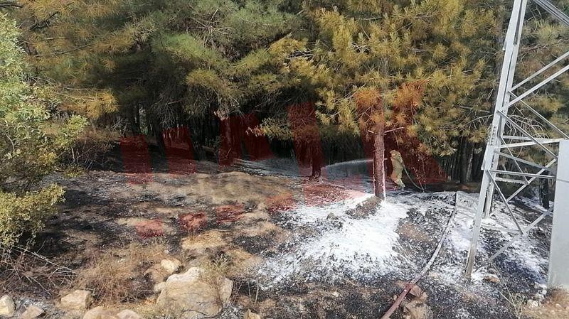 Pamukova'da orman yangını büyümeden söndürüldü..