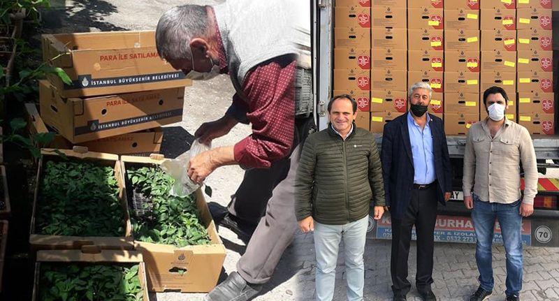 CHP Sakarya'da çiftçilere 1 buçuk milyon biber fidesi dağıtıyor