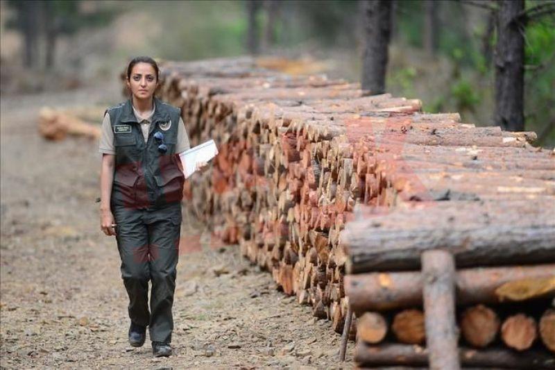 Geyve'de orman kaçakçıları ormancıları darp ettiler..