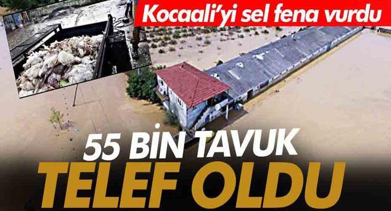 Sakarya'nın Kocaali İlçesini sel fena vurdu! 55 bin tavuk telef oldu