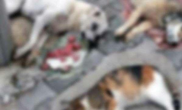 Pamukova'da 2 köpek ve 1 kediyi zehirli etle katlettiler!