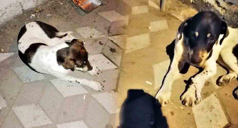 Köpeğe çarpıp bu halde bıraktılar! Yetkililere ulaşılamıyor…!
