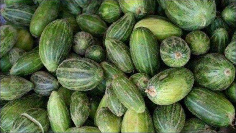 Dış görünüşü karpuz, iç görünüşü kavuna benziyor: Viranşehir'de 'şelengo' hasadı başladı