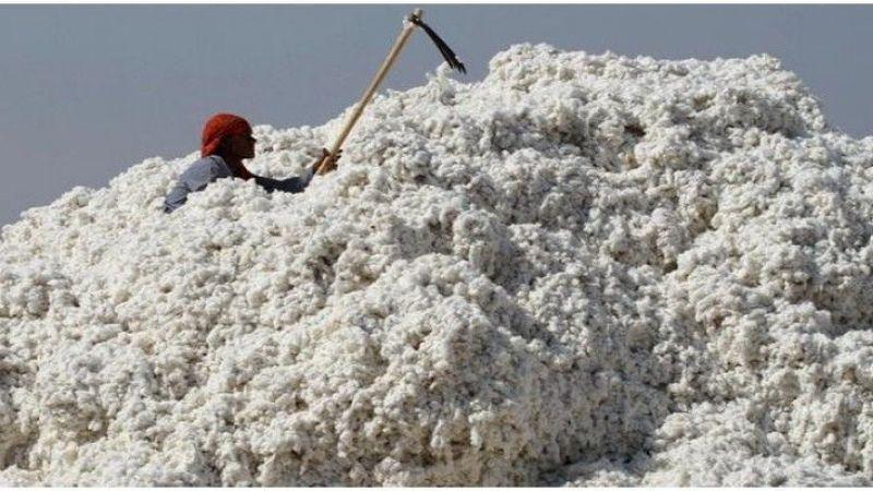Şanlıurfa'da Preseli Pamuk kaç liradan satıldı?