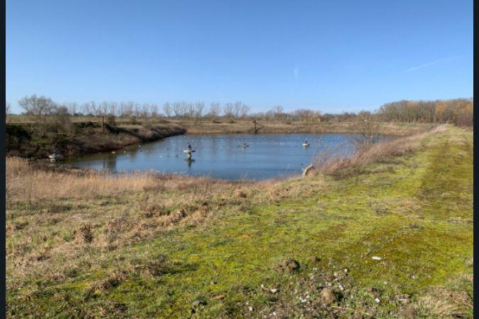 Eski bir yerleşim göleti, yaban hayat cennetine dönüştürülüyor