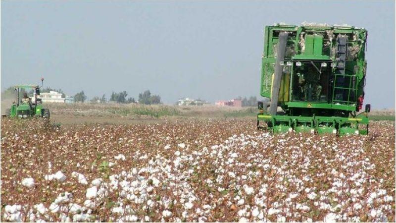 Urfa'da Pamuk hırsızları jandarmadan kaçamadı