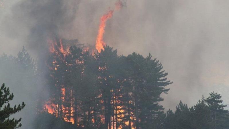 Edirne Avrupa Kent mevkisi yakınlarında otluk alanda henüz belirlenemeyen nedenle çıkan yangın, rüzgarında etkisiyle büyüdü.