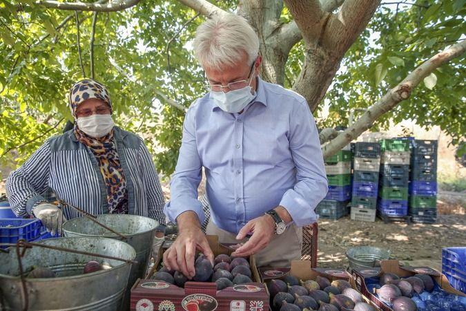 Siyah incir hasadı çiftçinin yüzünü güldürdü