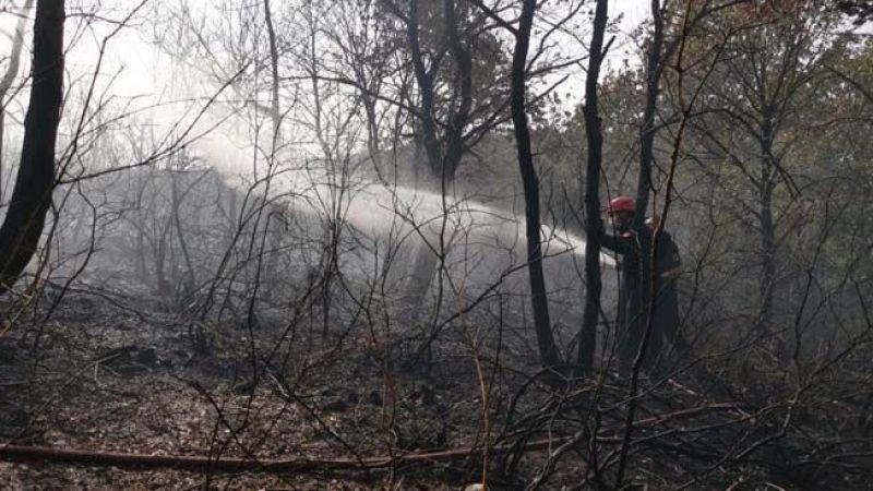 Kocaeli'de orman yangını korkuttu