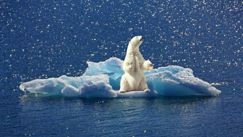 Kuzey Kutbu alarm veriyor!