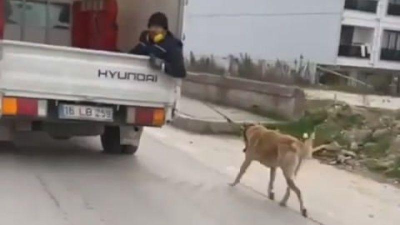 Bursa'da köpeği kamyonetin arkasında sürükleyen adam tepki çekti
