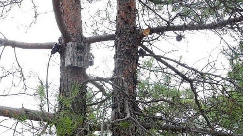 Bolu'da otokapanlar ormanları koruyor
