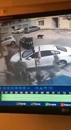 Bursa'da jip sürücüsü köpeği ezdi