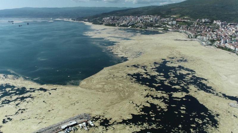 Bursa sahillerinde salya istilası!