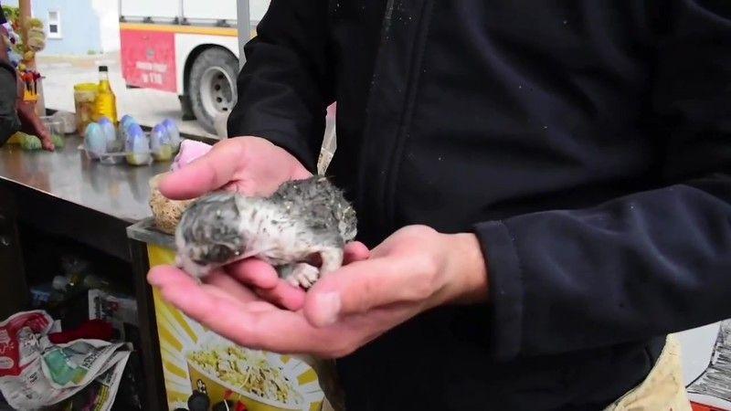 Bursa'da sıkışan kediyi kurtarma operasyonu