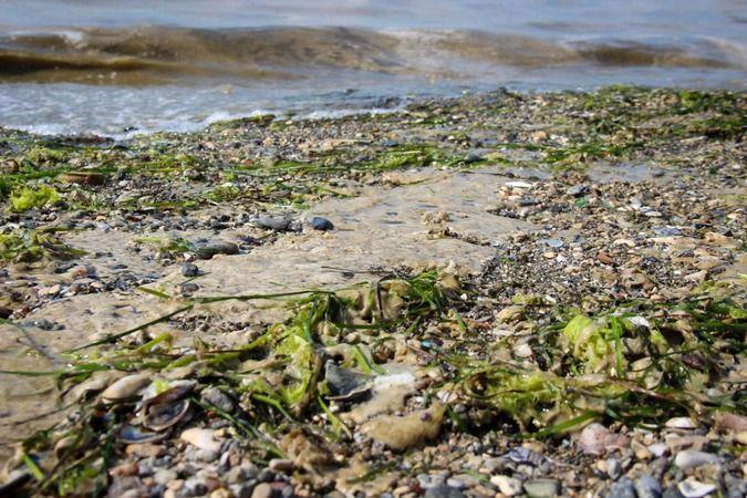 Marmara sahillerini adım adım saran müsilaj