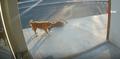 Havlayan köpekten korktu yola atladı
