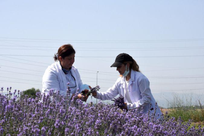Tıbbi ve aromatik bitki yetiştirerek eğitime katkı sağlıyorlar