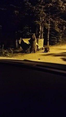 Uludağ'da ayı turist kovalamacası komik görüntülere sahne oldu