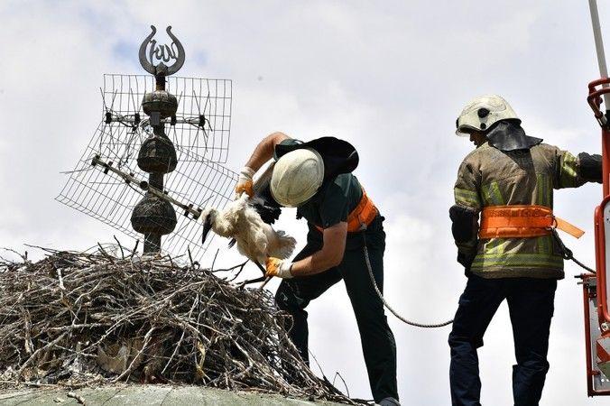 Bursa Osmangazi Belediyesi leylek yavrularına kubbenin üzerinde tedavi etti