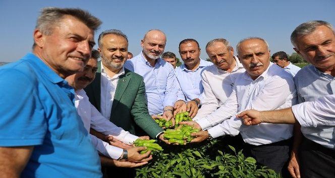 Bursa Büyükşehir Belediyesi destekliyor, çiftçi kazanıyor