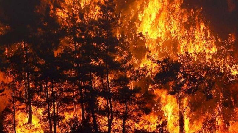 Yangın kabusu devam ediyor: İşte son durum