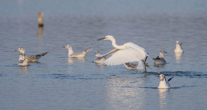 Göçmen kuşların sonbahar telaşı