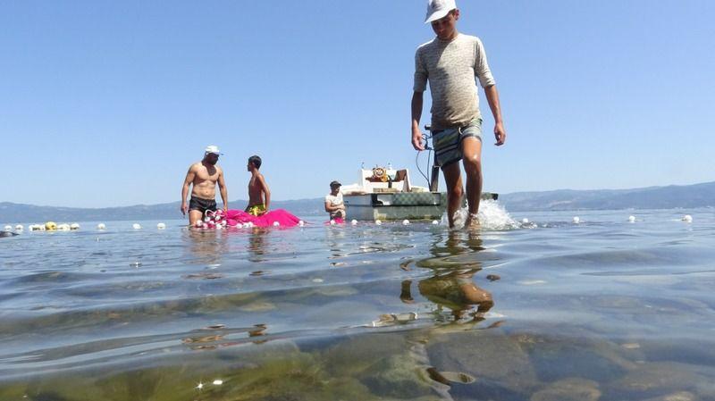 İznik Gölü'nde gümüş balığı tehlikesi