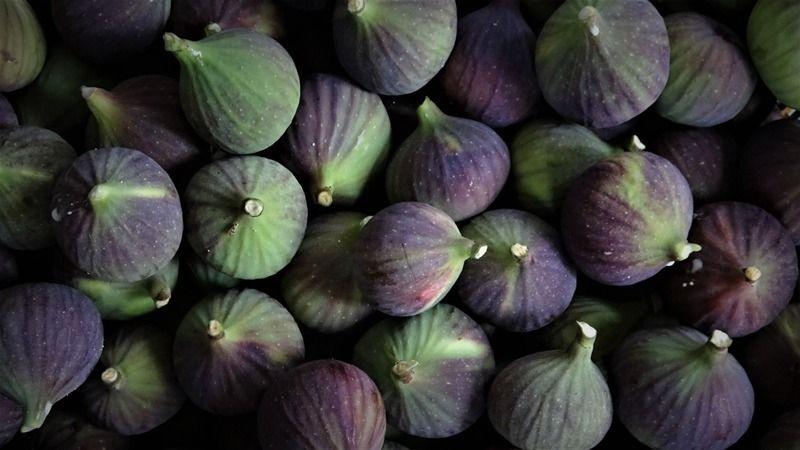Dünyada sadece Bursa'nın 40 köyünde yetişen Bursa siyah incirinin hasadı başladı. Bu yıl incirler döküldüğü için rekoltede yüzde 50 azalma var.