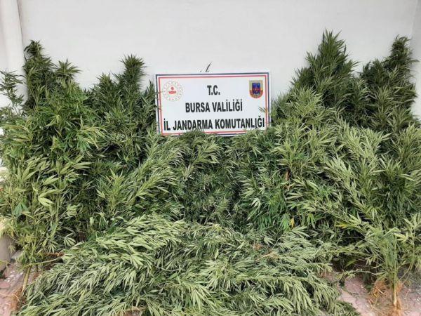 Bursa'da uyuşturucu operasyonu: 2 şüpheli yakalandı