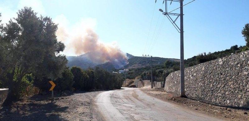 Bursa'nın Mudanya ilçesinde ormanlık alanda sebebi bilinmeyen bir yangın çıktı.