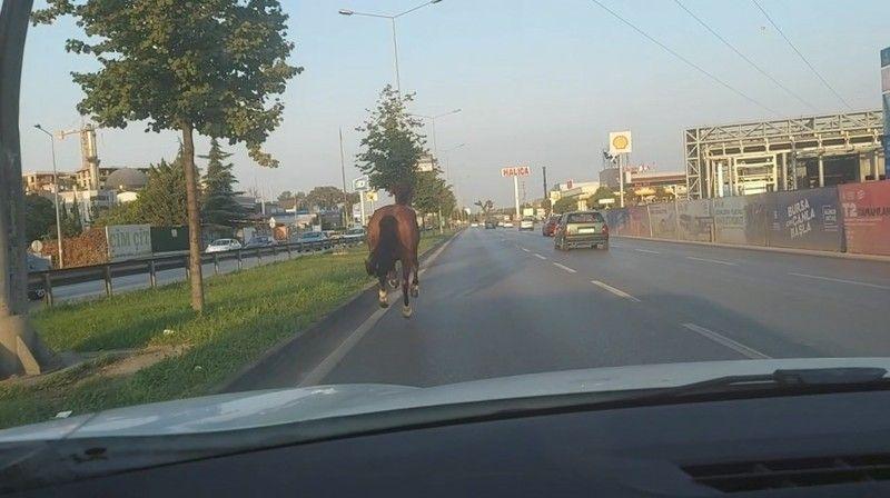 Bursa'da firar eden at trafiği altüst etti