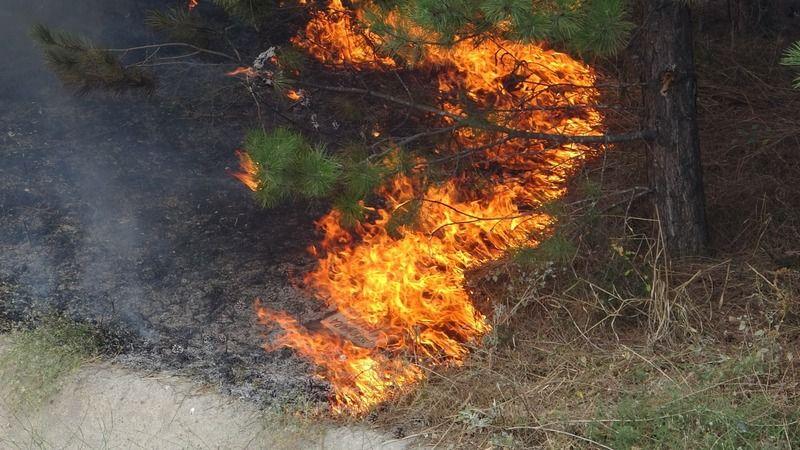 Bursa'da otoyol girişinde bulunan ağaçlık alanda çıkan yangın vatandaşlara korku dolu anlar yaşattı.