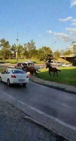 Bursa'da sahipsiz atların kaldırımda yürüyüp araçlar gibi anayolda ilerlemesi tehlikeye davetiye çıkarıyor. Vatandaşların kameralarına yansıyan görünt