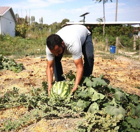 Nilüfer Belediyesi Küçük Ölçekli Kent Bostanlarında yaz sezonu ürünlerinin tohumları toplanmaya başlandı. Elde edilen tohumlar kurutulduktan sonra Toh