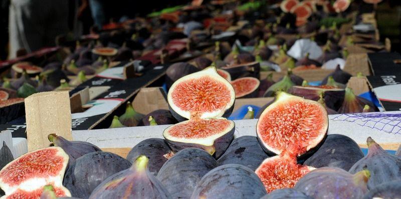 Bursa'nın siyah inciri görücüye çıkıyor